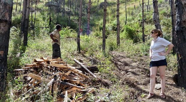 abattage bois