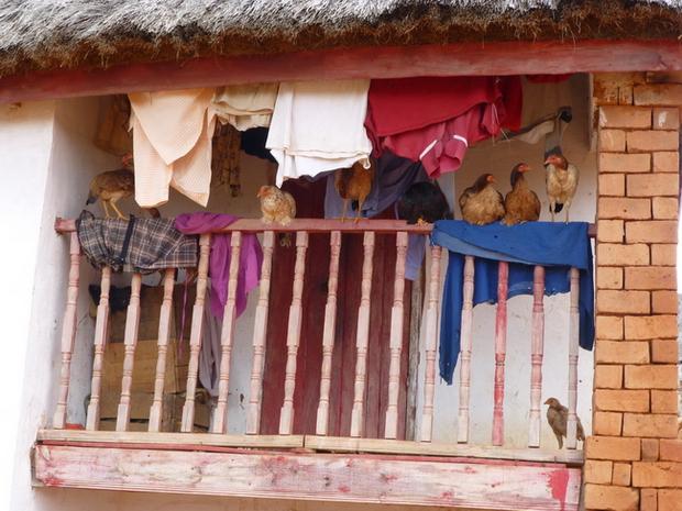balcon ou poulailler