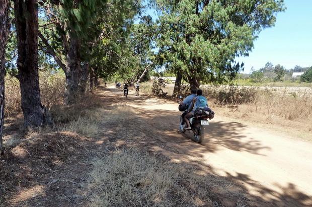 forêt de pins de TSILAMAHANA