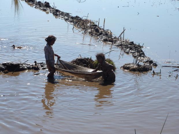 Il n'y a pas 50 manières pour avoir du poisson dans les rizières, soit au filet comme les 2 jeunes filles, ou bien manière plus radicale on asséche le carré de rizière