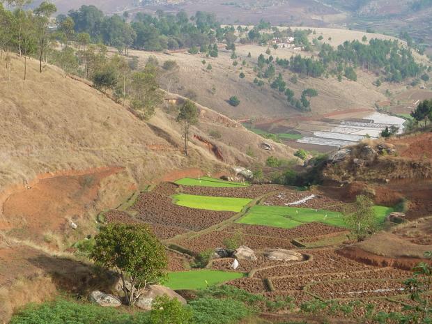 rizière dans le fond de la vallée