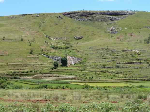cultures en rizières au pied du massif