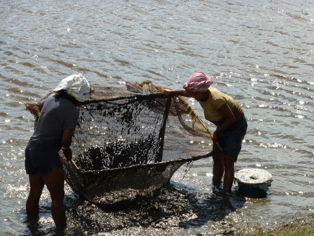 pêche à la crevette foza orana