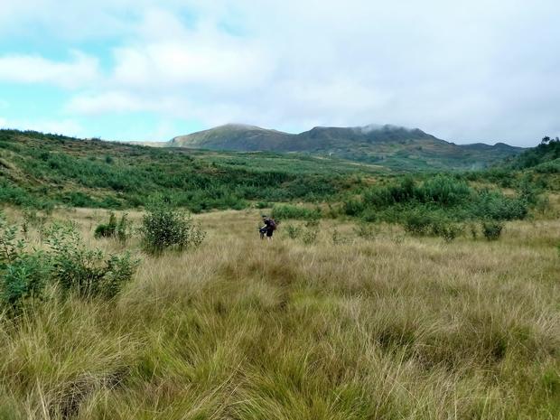 plaine herbeuse