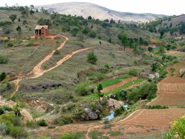 rizières Miadamanjaka derrière le massif Ambohidrazaka