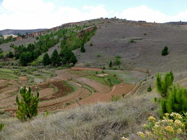 rizières contreforts Ambohidralambo