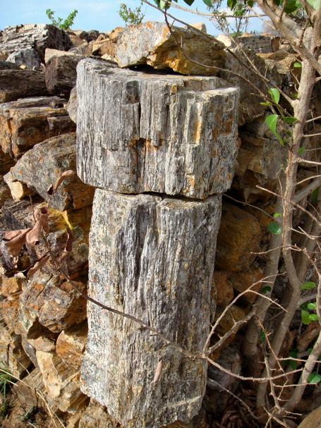roches silicifiées