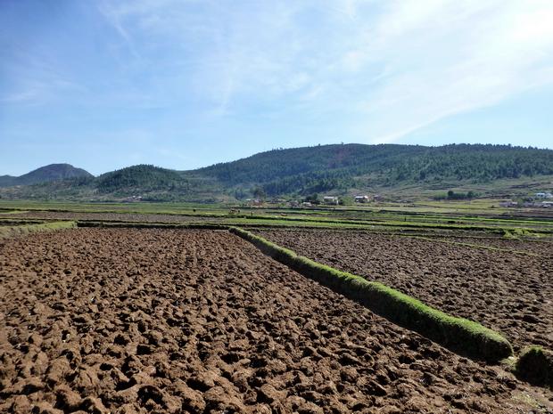 rizières et labours sont les 2 mamelles de Faratsiho