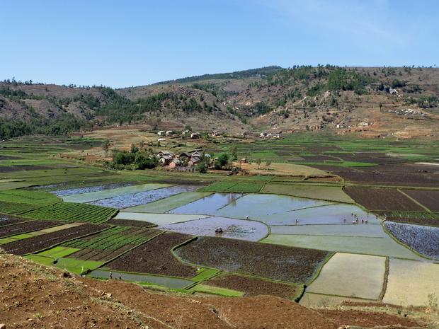 rizières ceinturant le village Ambodivona