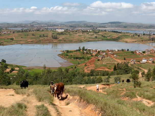 rizières Antsangasanga