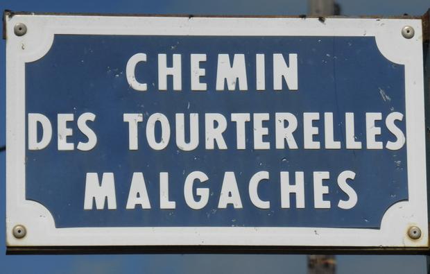 chemin des tourterelles malgaches