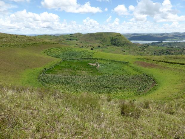 culture de maïs dans le cratère Topy