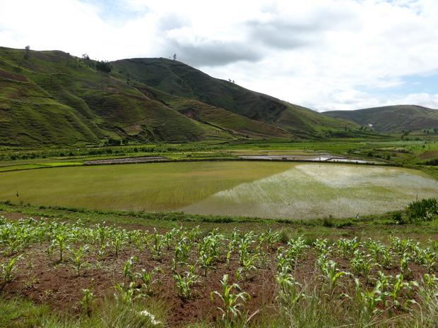 vallée de la Sahora : rizières au pied du massif Tsaranonenana