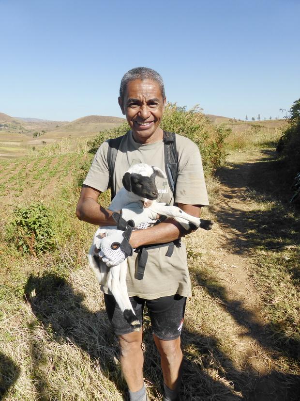Doli guide et son mouton