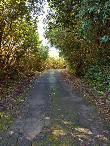 forêt Basse-Vallée