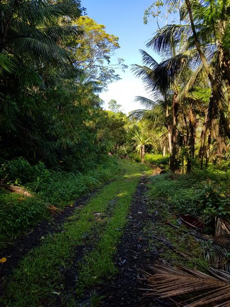 Route forestière des Camphriers