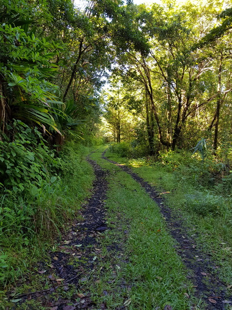 forêt Mare-Longue