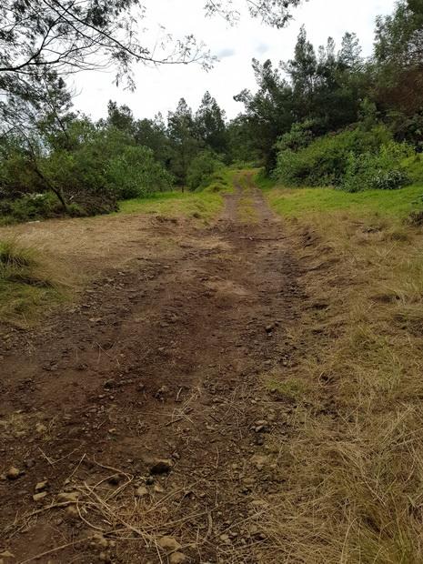 Chemin Mondon à travers les pâturages