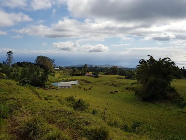 route forestière des Palmistes