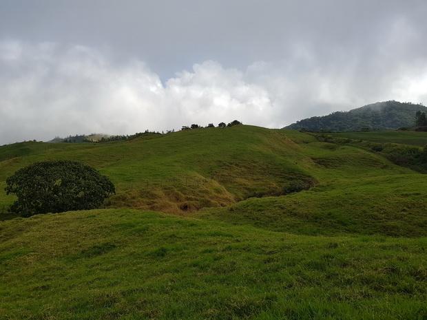 Du Chemin de Grande Terre pâturages des hauts