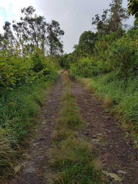 Route forestière du Bois de Néfles