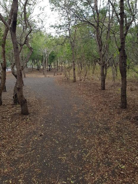 sentier pédestre forêt domaniale de la côte sous le vent
