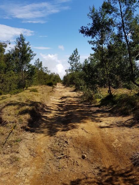 Chemin des Tamarins