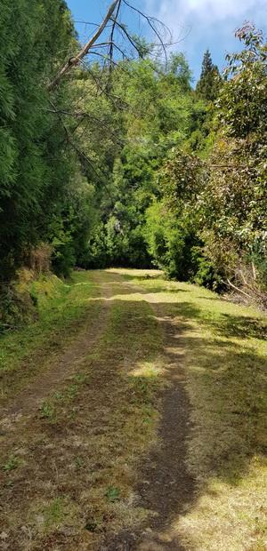 route forestière de la Grande Ferme