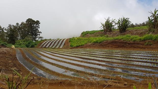 Le long du Chemin des Acacias les cultures maraîchères
