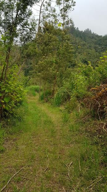vers la ravine Petite-Île