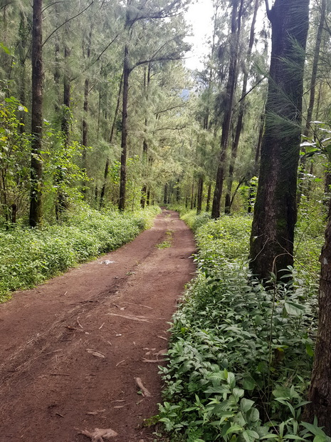 forêt menant à Roche Plate