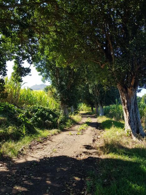 chemin Lancastel