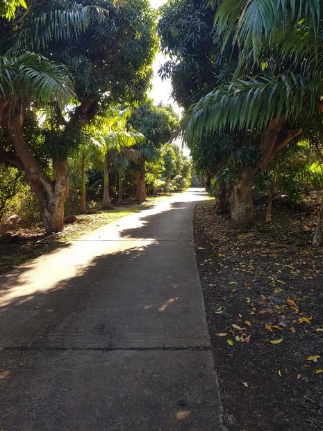 chemin béton vers les centres équestres du Cap et du Trou de Jare