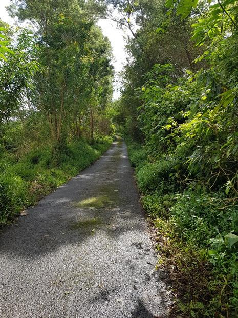 Chemin Tamarin