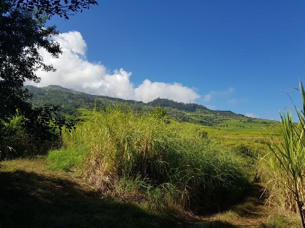 Piton Calvaire vers les centres équestres du Cap et du Trou de Jare