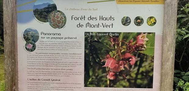 Forêt des Hauts de Mont Vert