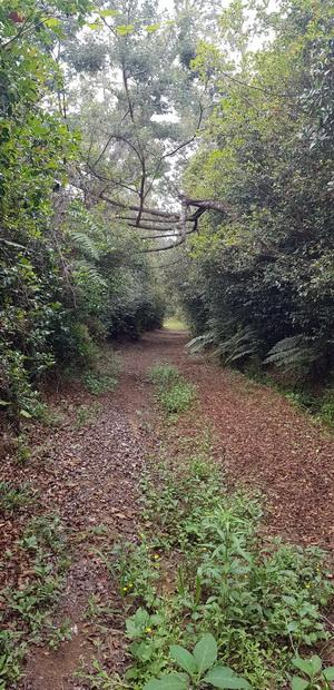 traversée de la forêt Sainte Thérèse et la Pointe du Bras Creux