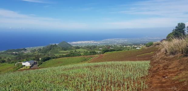 chemin des acacias Piton de Mont Vert
