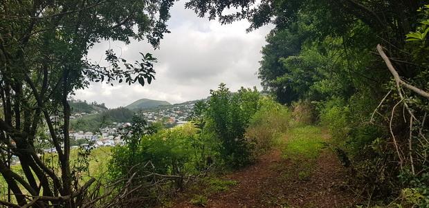 du sommet du Piton Rosile Petite-île