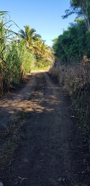 Chemin des Faisans