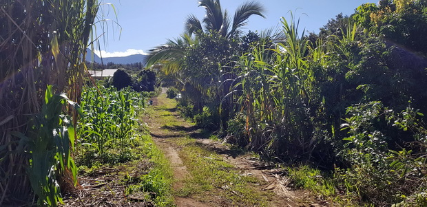 Chemin des Baobabs