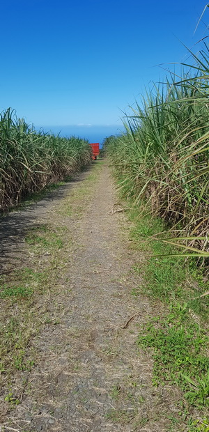 chemin des Longoses