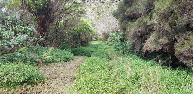 Route forestière de la Vierge