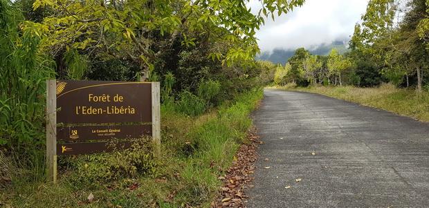 montée au belvédère de l'Eden par la forêt de l'Eden-Libéria
