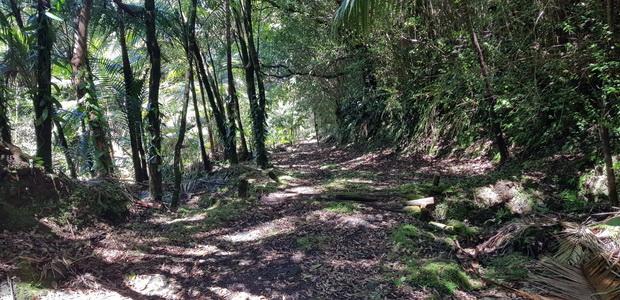 Piste privée de la route forestière des Camphriers à Baril les Hauts