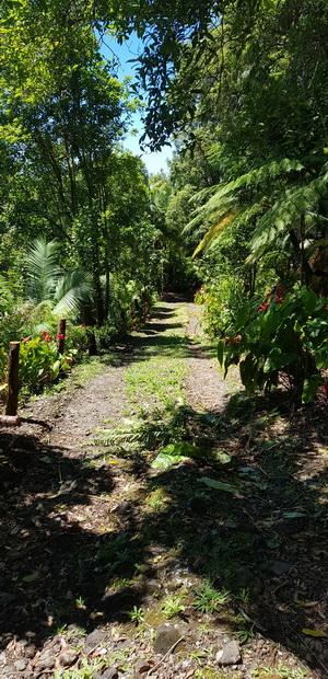 Piste privée de la route forestière des Camphriers au Chemin Paul Hoarau