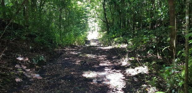 Forêt Mare Longue