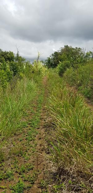 chemin de cannes vers Chemin des Ruches et la D29