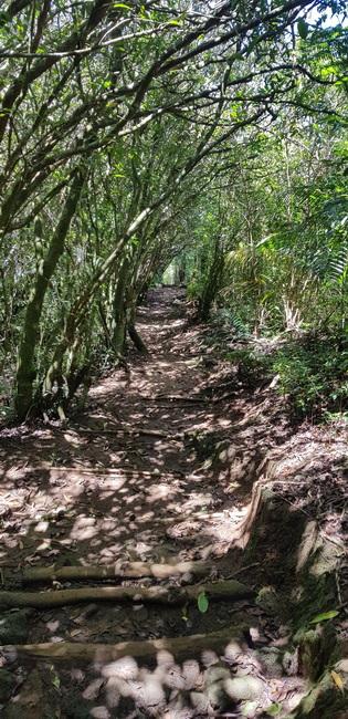 sentier aux nombreuses marches
