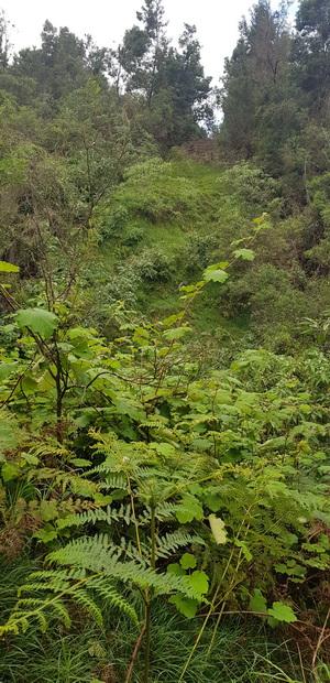 Piste forestière Calebasse